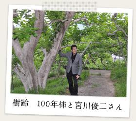 樹齢 100年柿と宮川俊二さん