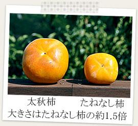 奈良県産太秋柿と奈良県産たねなし柿比較