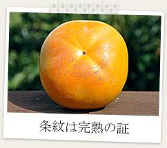 奈良県産太秋柿〜条文は完熟の証〜