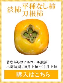 渋柿 平たねなし柿 刀根柿