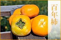 和の柿 百年柿