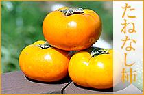 和の柿 たねなし柿